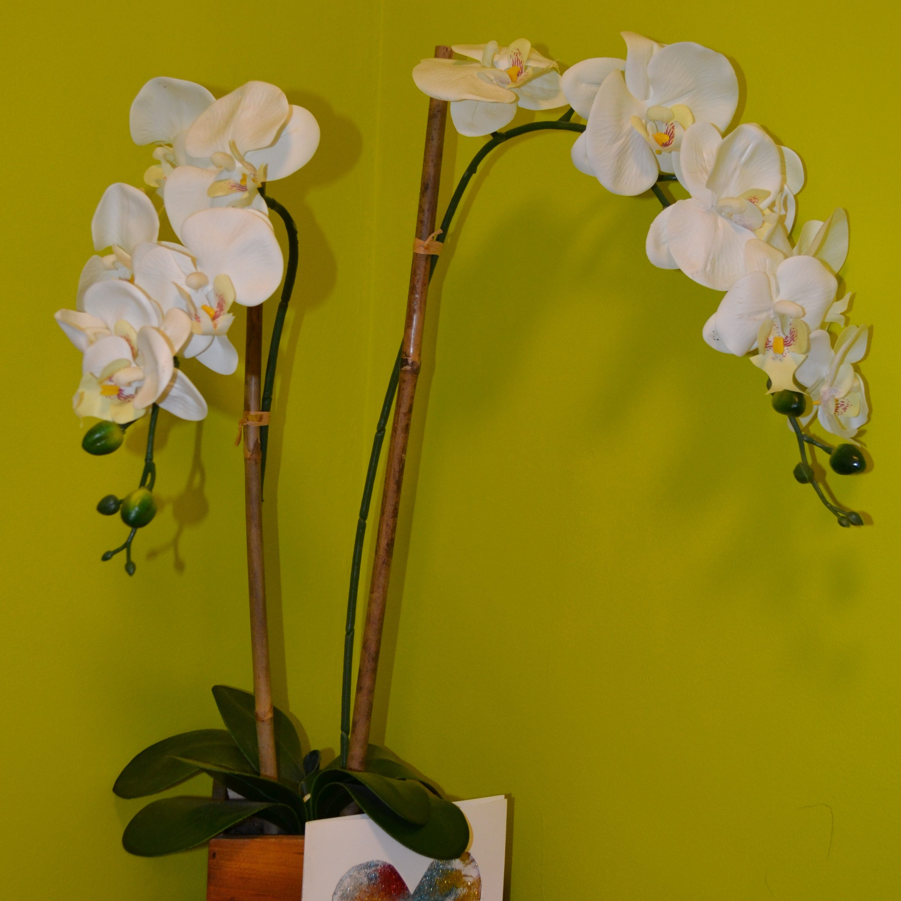 Shows white orchids against green of Forest Corridor